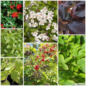Mixed Native Hedging